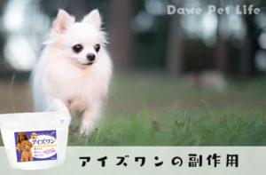 草原を駆け抜ける子犬