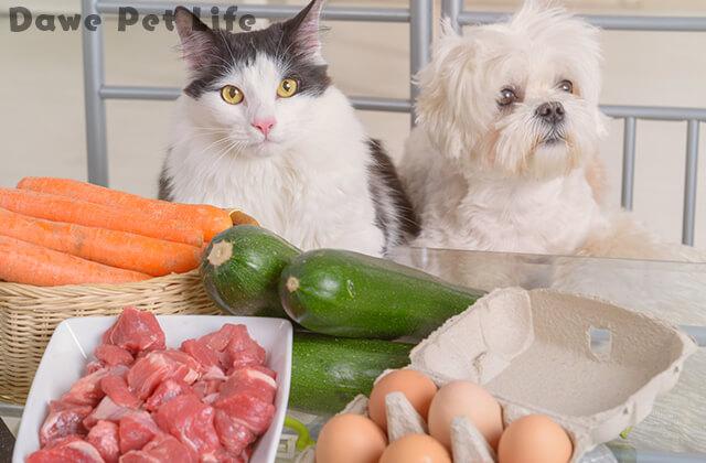 人間の食べ物を眺める犬と猫