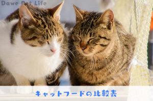 仲良しの猫ふたり