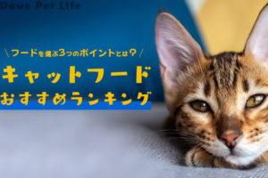 キャットフードを見つめる猫