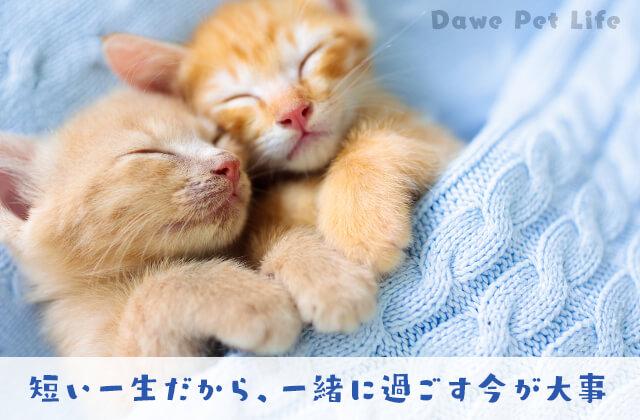 二人の仲良し猫が寝ている姿