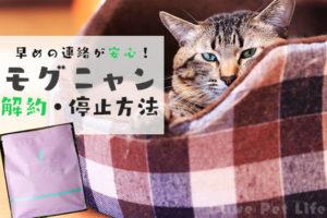 モグニャンに飽きてしまった猫